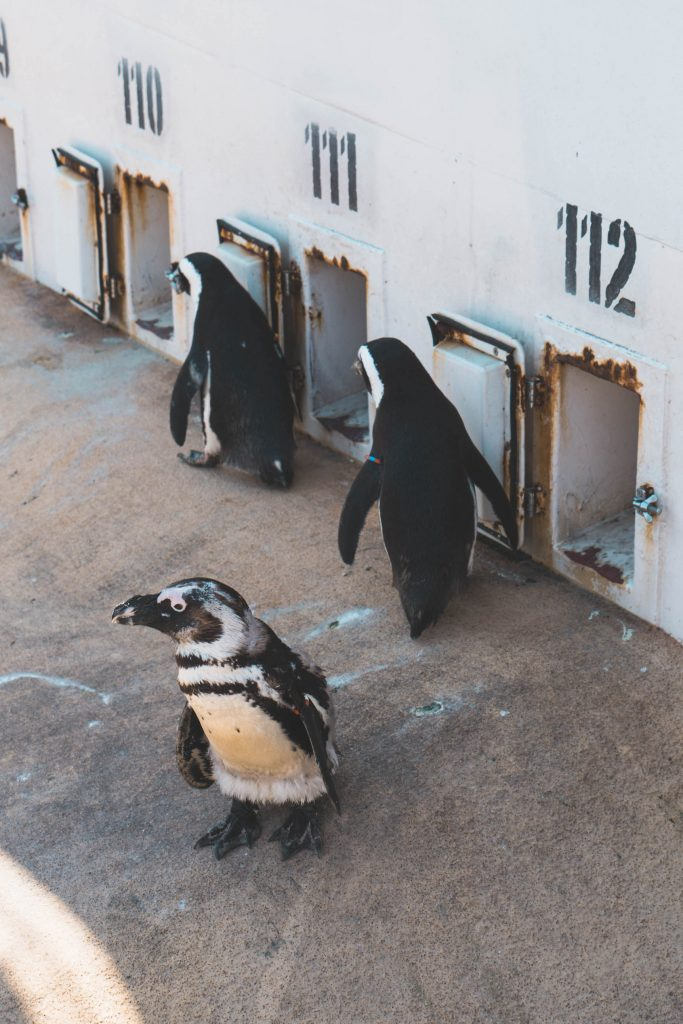 Hannover erlebnis zoo pinguins