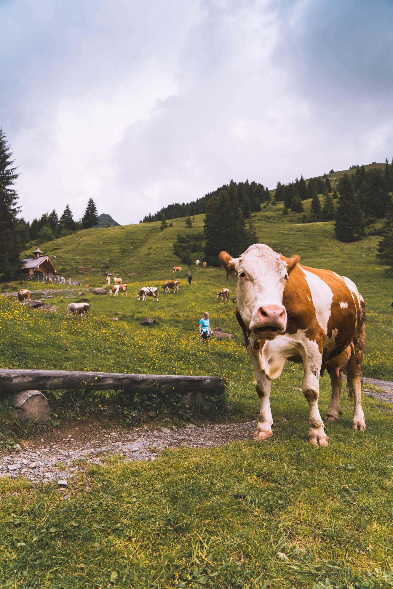 Saalbach zomer