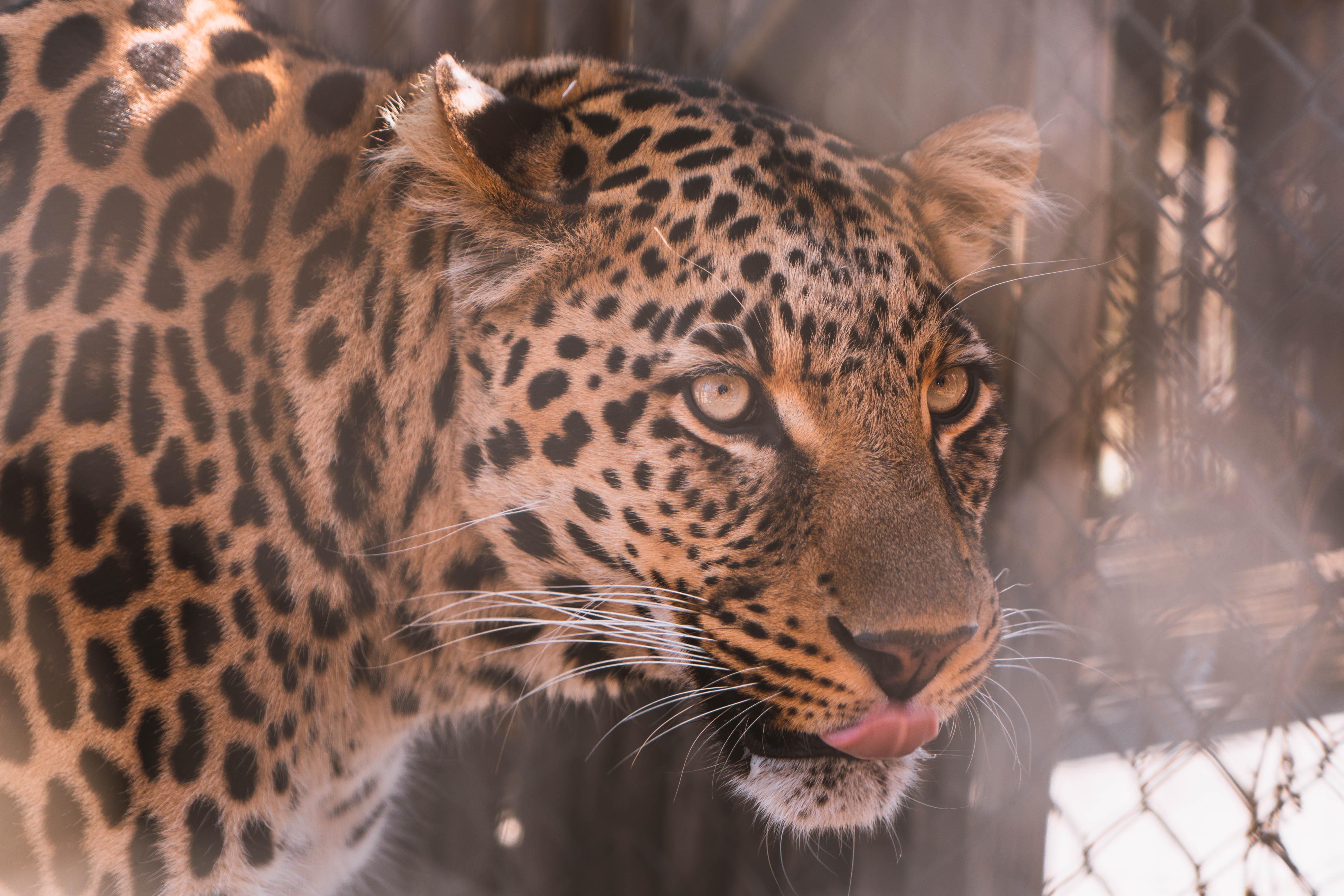 Zuid-Afrika wilde dieren