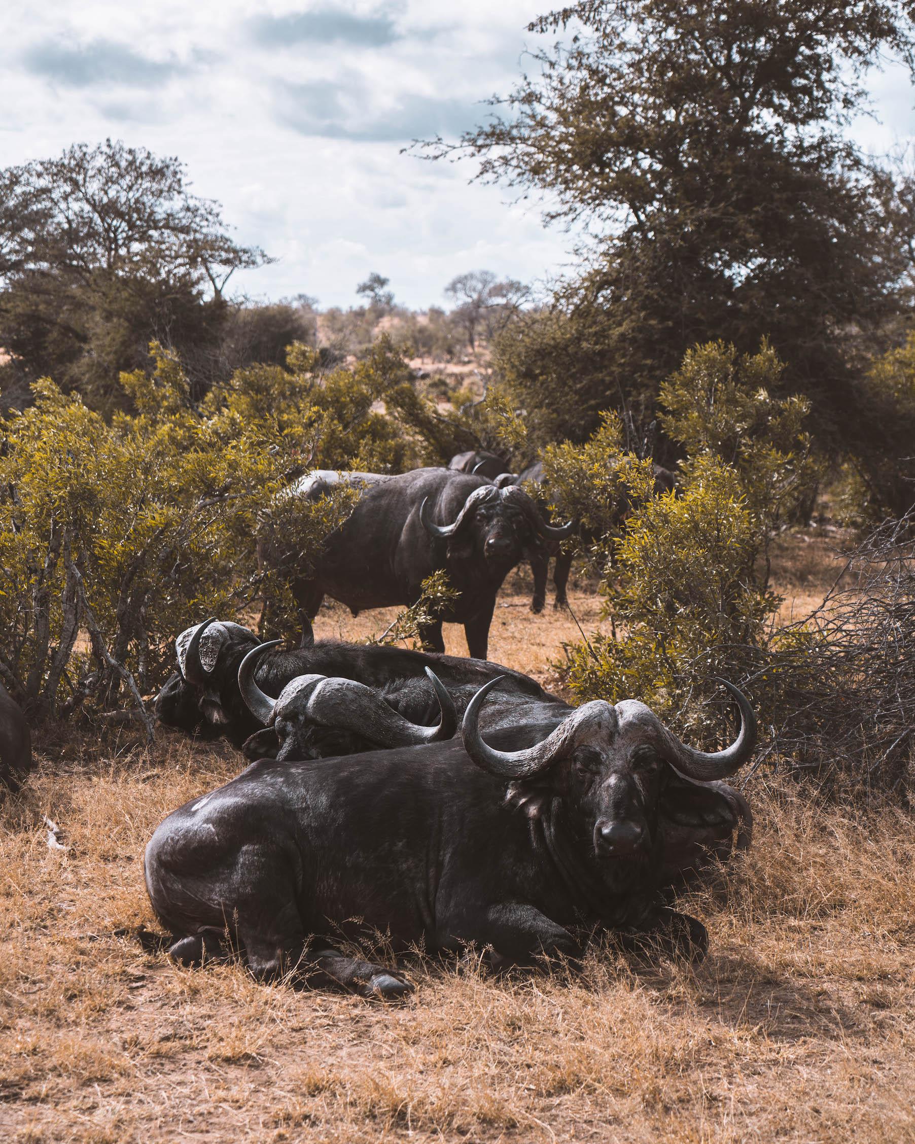 Kruger Nationaal Park