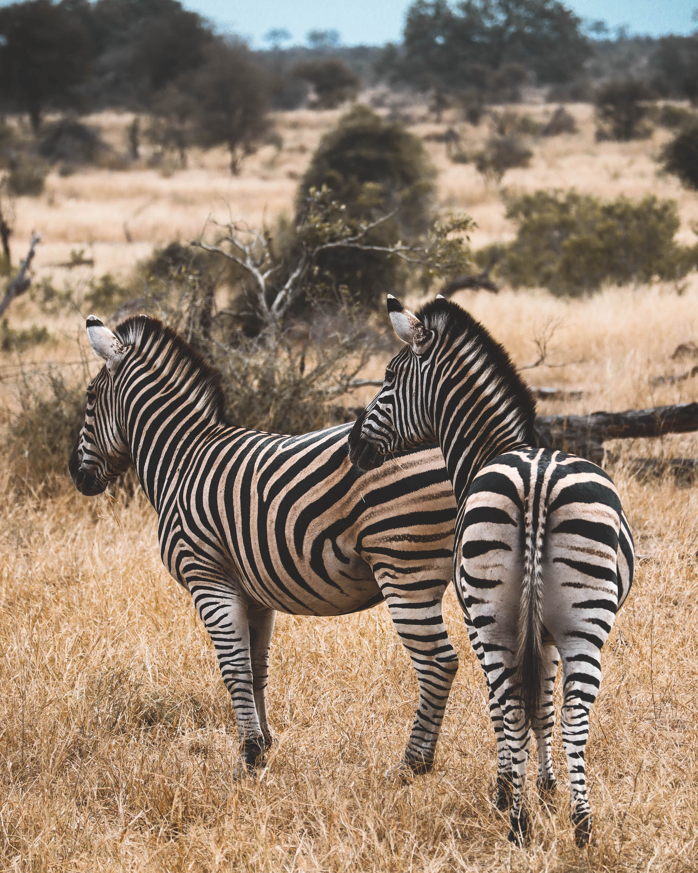game reserve