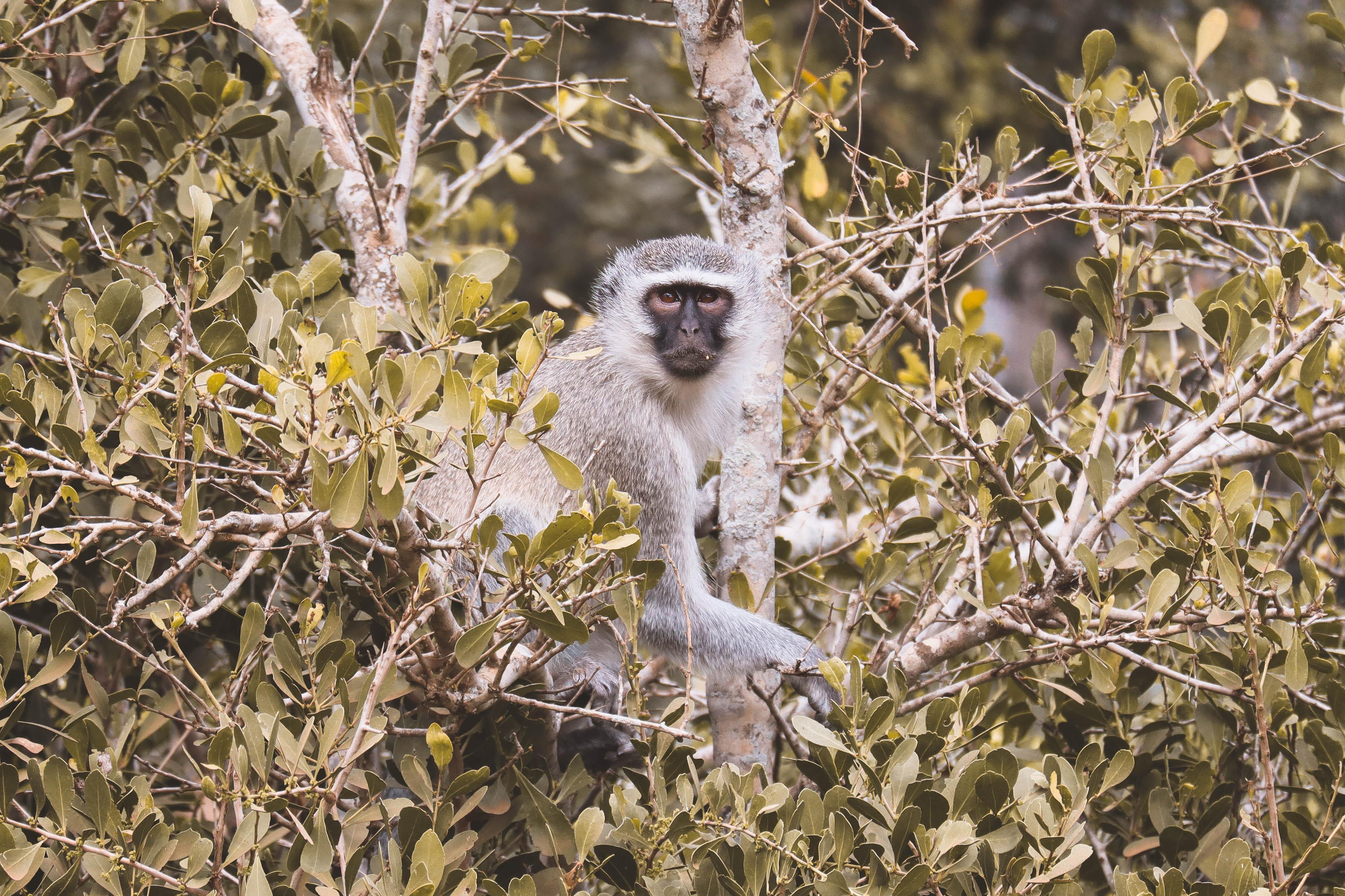 Kruger Nationaal Park dieren