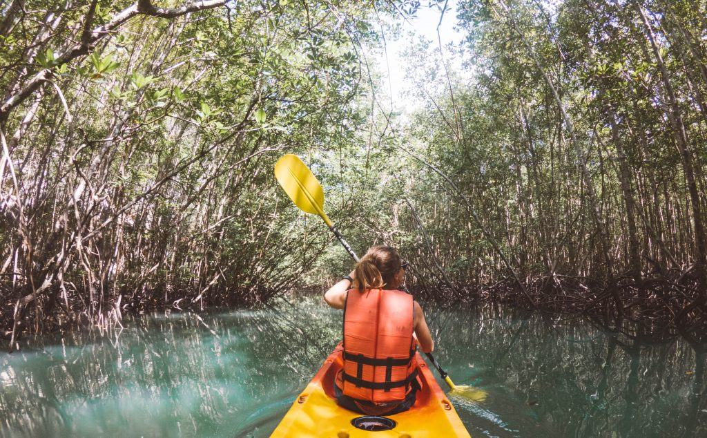 krabi mangroves kayak