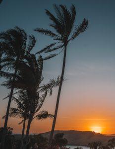 hamilton island palmtree