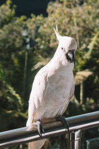 hamilton island bird