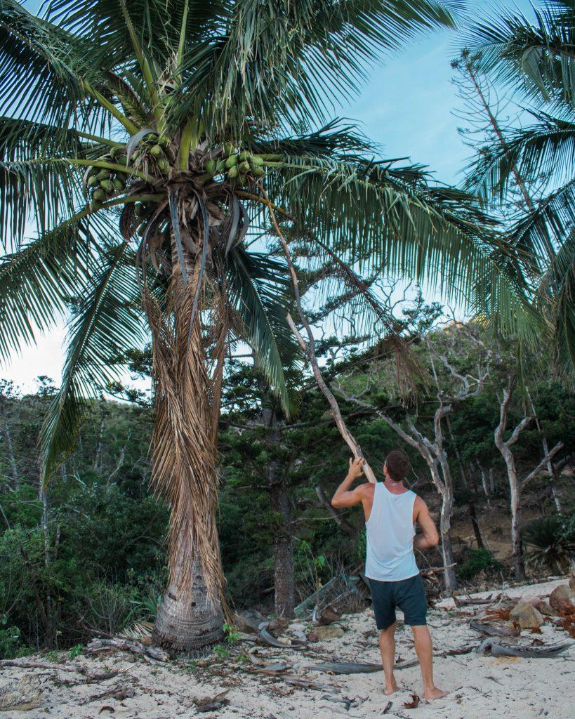 hamilton island coconut
