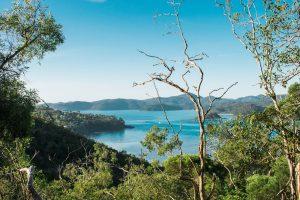 hamilton island bushwalk