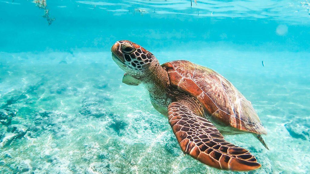 moalboal snorkel