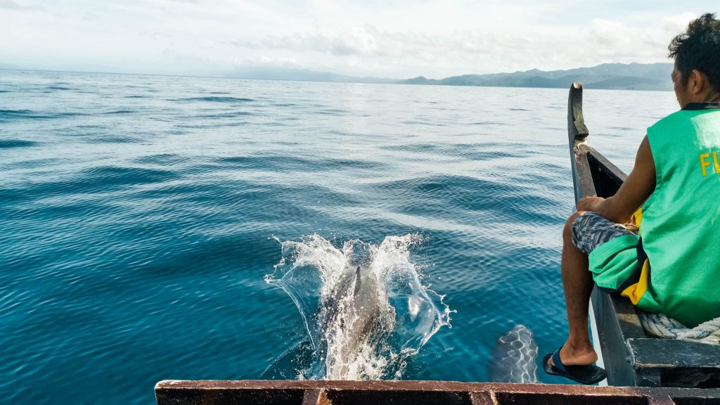 dolfijnen leyte