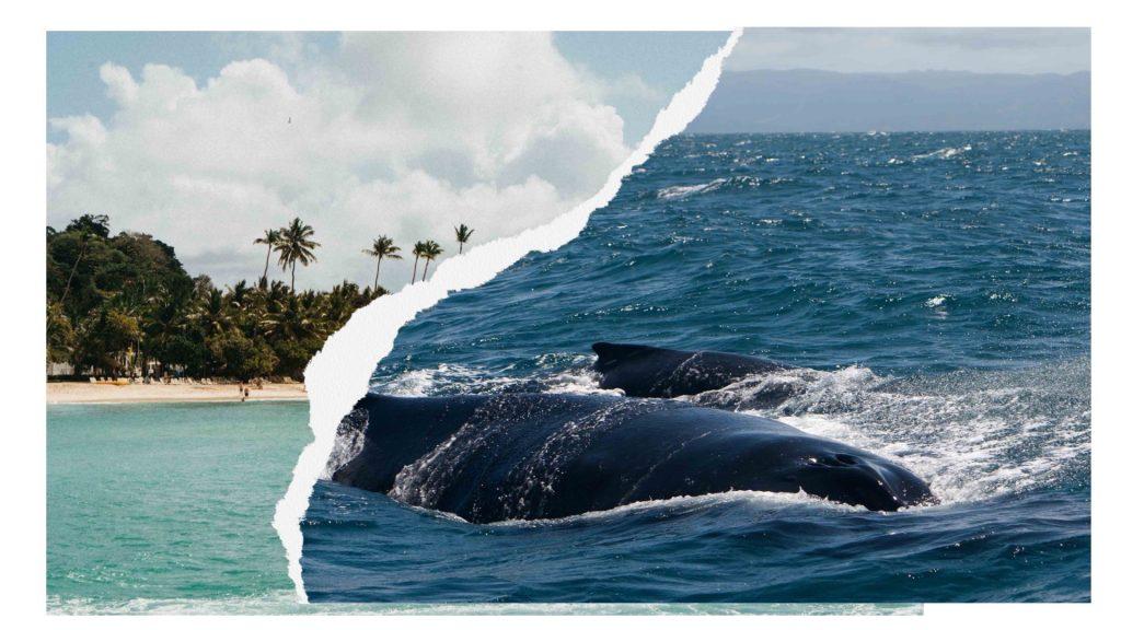 Dominicaanse Republiek whalewatching