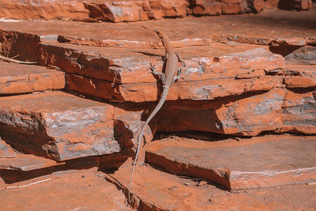 karijni national park reptile