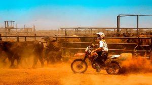 motorbike mustering
