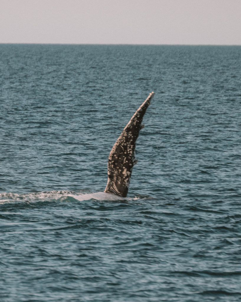 exmouth whale watch