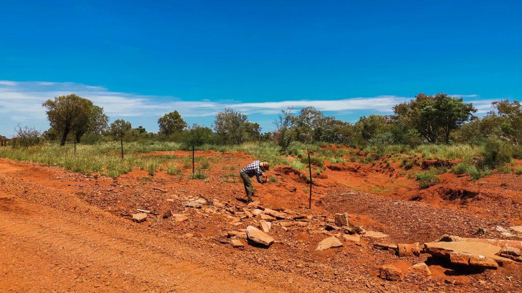 cattlestation work
