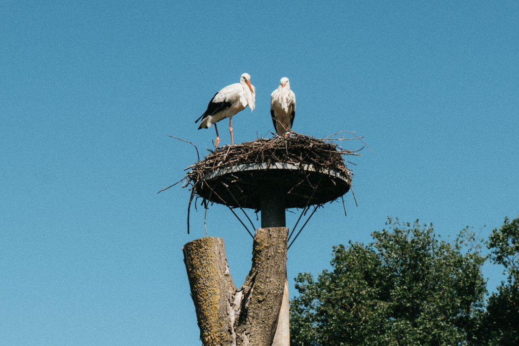 Het Zwin Natuurpark Knokke